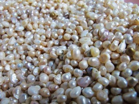 [一品軒促銷品]養殖珍珠裸珠批發零售[100P起批]每斤2000起