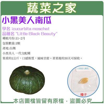 【蔬菜之家】G52.小黑美人南瓜種子1...
