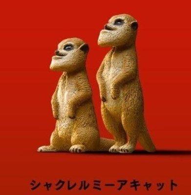 Takara 熊貓之穴 シャクレルプラネット1 Shakurel Planet 1 下巴兜兜 戽斗動物園P1 (松鼠)