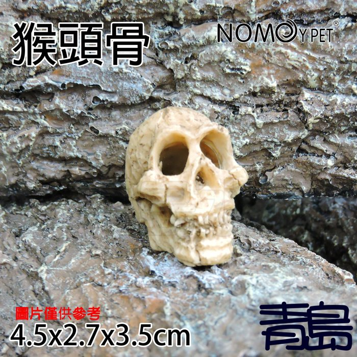 Y。。。青島水族。。。NS-91中國NOMO諾摩-骨頭化石 躲藏棲息 造景裝飾 水族魚缸繁殖躲避==迷你猴頭骨