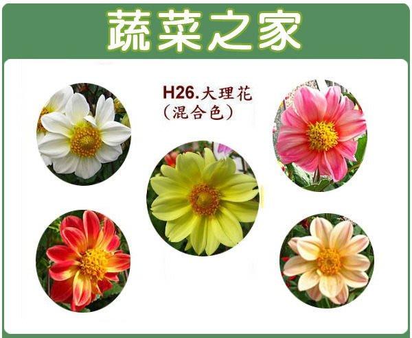 【蔬菜之家】H26.單瓣大理花種子10顆(混合色,高30~40cm.花卉種子)