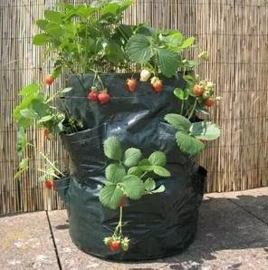 【草莓種植袋-八口袋-180克PE布-2個/包-1包/組】陽臺草莓種植袋八口袋 藥草蔬菜生態袋-517002
