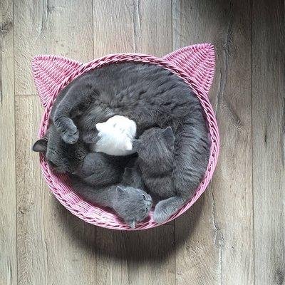 【興達生活】藤編貓盆寵物窩貓窩狗窩貓盆冬夏兩用寵物窩送墊子`9974