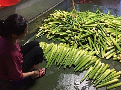 南投埔里筊白筍 (美人腿)