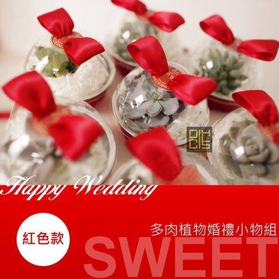 ~創小品~多肉植物婚禮小物組 聖誕節  新年 派對小  贈品 喜慶節日 DIY訂制 訂做 客製化