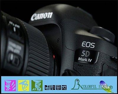 彩色鳥(租 相機 鏡頭) 租 Canon EOS 5D mark IV Canon 5D4 5DIV 5D IV 出租