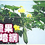 【ToolBox】《180*180cm》家庭園藝用網/ 植物...
