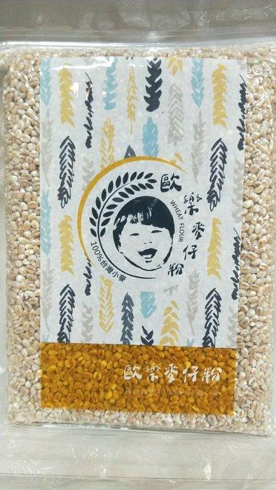 【喜樂之地】歐樂麥仔 小麥粒(台中選二號) 500g