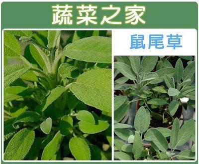 【蔬菜之家】K16.鼠尾草種子20顆(...