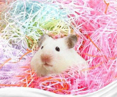 倉鼠遊戲紙條金絲熊墊料倉鼠墊材保暖荷蘭豬墊腳做窩玩具70g *兩包