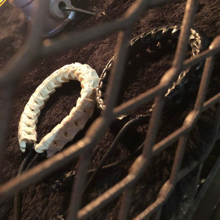 澳洲蛇骨手環-澳洲製造