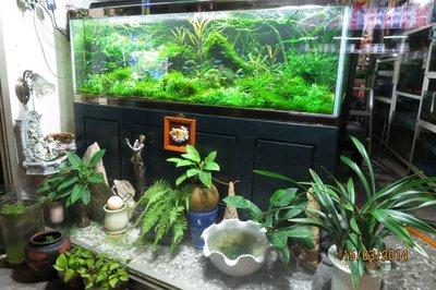 新北市板橋區~魚缸保養~魚缸清洗~魚缸訂做~平價收費