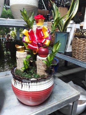 喬木園藝-過年送禮盆栽-巴西鐵樹