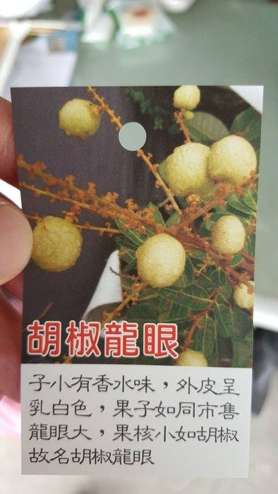 ╭*田尾玫瑰園*╯ 新品種水果苗-(胡椒龍眼)高1尺350元/盆