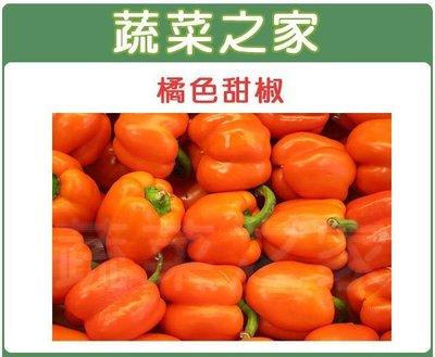 全館滿799免運【蔬菜之家00G76】大包裝.橘色甜椒種子60顆(蔬菜種子)※此商品運費請選宅配貨運※