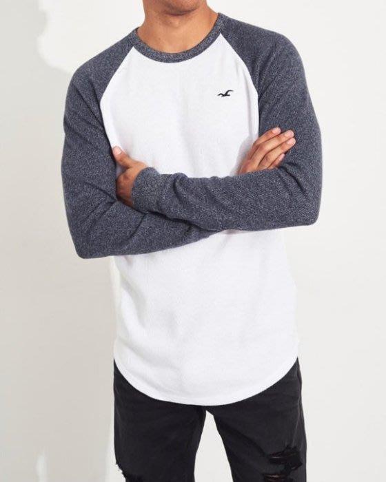 Hollister HCO 海鷗 針織 長袖T恤 白/藍牛角袖 美國潮踢屋