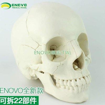 (ENOVO-309) 醫學用人體頭骨模型頭顱骨拼裝可拆美容微整形教學頭骨