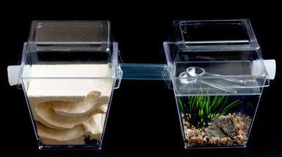 【螞蟻的家】晶鑽型外接迷你活動場/餵食場,買螞蟻,賣螞蟻,防螞蟻,養螞蟻