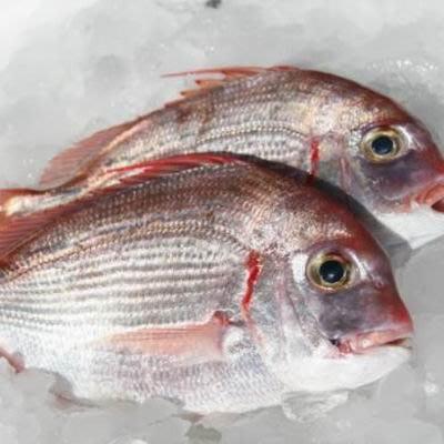 【澎湖魬鯛(盤仔魚)-約2斤/組】新鮮魚貨乾淨處理產地直送(秤重計價)-2501003