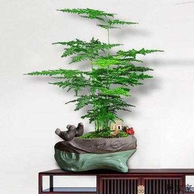 花盆 花器 陶瓷擺飾 陶瓷文竹專用綠植個性青蛙雕塑造型木樁室內家用紫砂胎綠蘿大花盆
