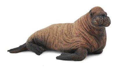 【阿LIN】88570A 幼海象 PROCON CollectA 動物模型 仿真動物模型 動物 海洋系列 教學模型
