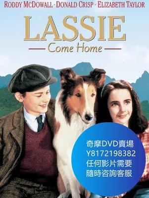 DVD 海量影片賣場 靈犬萊西/Lassie Come Home  電影 1943年