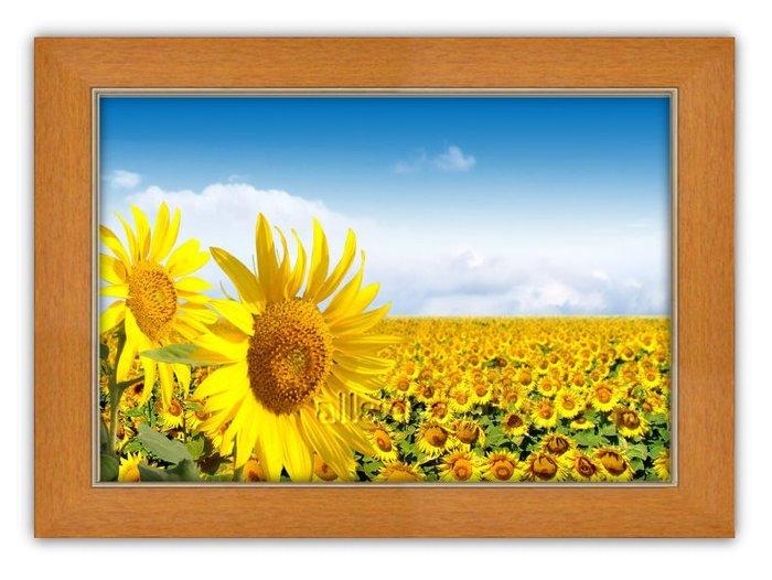 四方名畫: 太陽花向日葵053 C尺寸  含實木框/厚無框畫 畫質細緻 裝飾畫MIT可訂製尺寸
