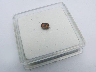 1822年Chile ・atakama砂漠採取 隕石(鉱物名:Parasite) 真品100%H25121158200.5000.B140729
