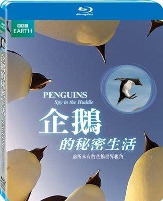 (全新未拆封)企鵝的秘密生活 PENGUINS-SPY IN THE HUDDLE 藍光BD(得利公司貨)