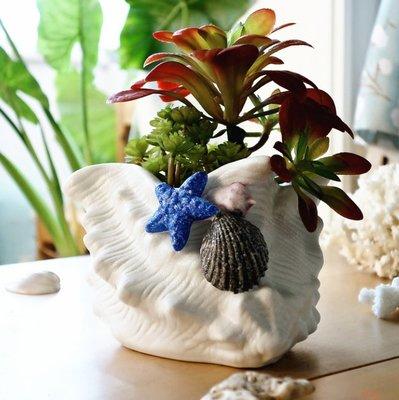 擺件家居飾品地中海白螺多肉陶瓷花盆創意盆栽客廳家居飾品工藝品