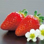 ↖紅寶石  草莓 (種子) ↗
