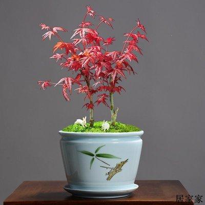 花盆 花器 陶瓷擺飾 紫砂粗陶瓷帶托盤大號花盆透氣簡約個性紅掌茉莉綠蘿植物多肉專用