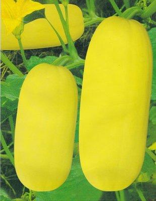 【大包裝蔬菜種子】黃皮筍瓜~是一種南瓜,嫩瓜期皮色淡黃,肉質細密,吃以嫩瓜為最佳。