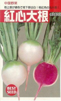 【大包裝蔬菜種子】紅心大根,深受日本人喜愛的漂亮蘿蔔品種!