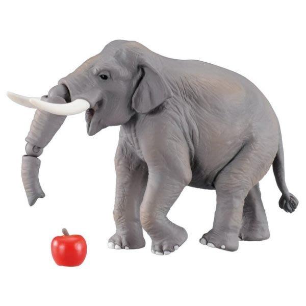 【阿LIN】98150 AS-33印度象 多美動物園 模型 教學 知識 TAKARA TOMY ST安全玩具