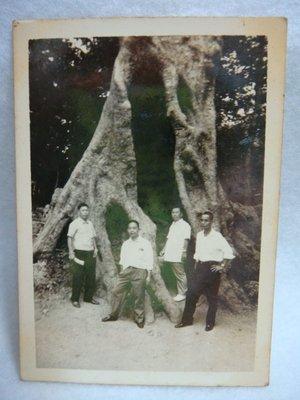 【早期老照片】民國40年代 阿里山神木