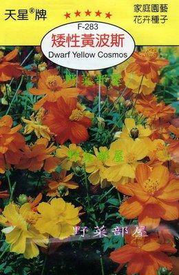 【野菜部屋~】Y23 矮性黃波斯Dwarf Yellow Cosmos~天星牌原包裝種子~每包15元~