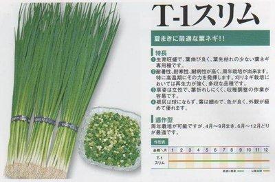 ~大包裝蔬菜種子~東北細蔥~是葉蔥,全葉 採食,最 家庭種植!