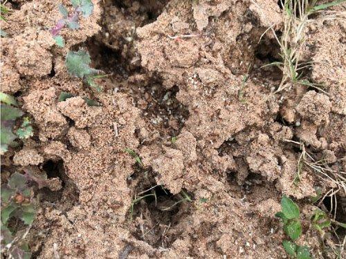 【螞蟻的家】清除入侵紅火蟻無毒中草湯汁精華液