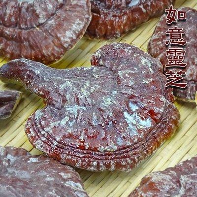 ~如意形松衫靈芝(一斤裝)~   台灣名產,還在花大錢吃膠囊嗎?自己煮,卡實在!【豐產香菇行】