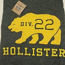 Hollister 熊圖T恤-現貨L號