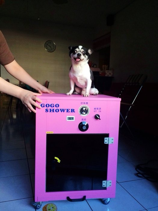 【GOGOSHOWER狗狗笑了】小型櫻花粉寵物除菌烘乾機