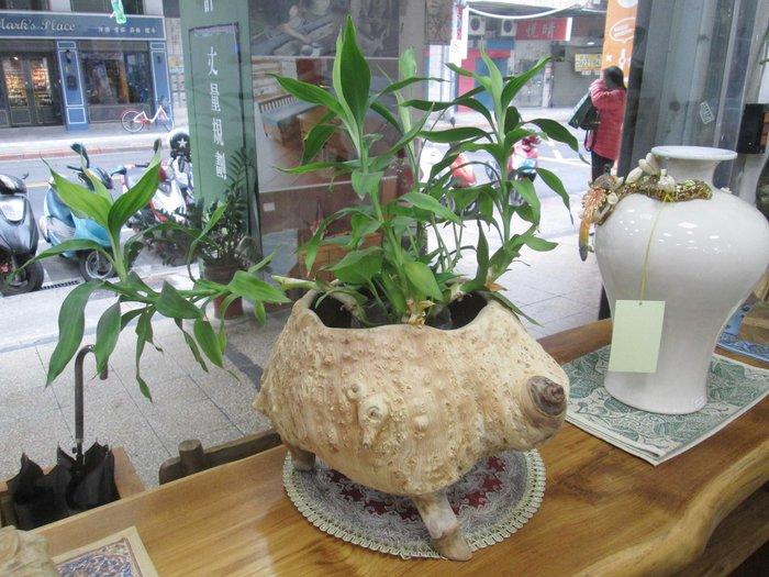 【肯萊柚木傢俱館】自然風格 手工製作 天然 老柚木奇木樹瘤 可當收納盤 糖果盤 水果盤