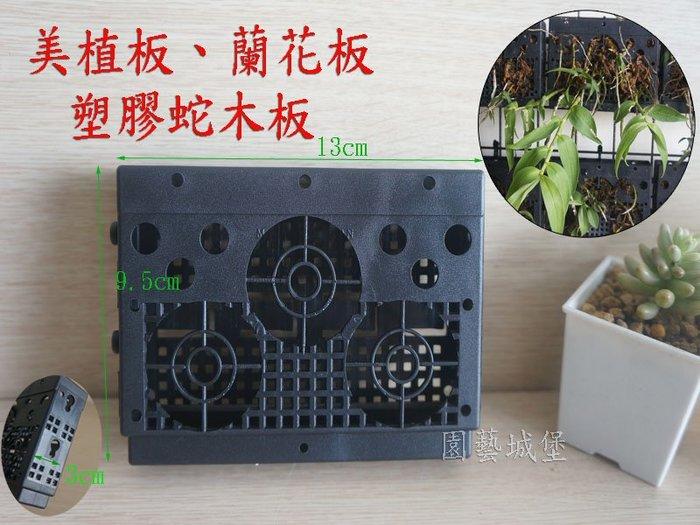 【園藝城堡】美植板 蘭花板 塑膠蛇木板 蘭花 蕨類 附生植物使用可取代蛇木板