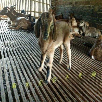 羊床漏板竹羊床漏糞板養殖板漏糞板竹養殖設備竹床板天天百貨
