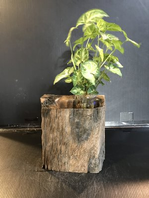 【 檜人檜語 】 風化青鋼櫟筆筒 花器