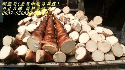 甜龍筍(兼售甜龍筍苗栽)    ~  自產自銷    價格最便宜。
