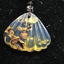 多米尼加藍珀 多明尼加藍珀 藍珀貝殼(帶植物出皮)