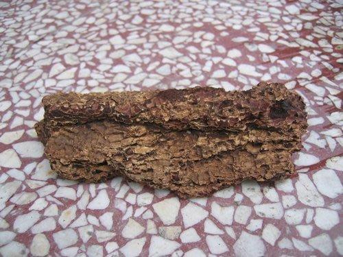 【甲蟲世界】甲蟲專用樹皮、樹塊、樹枝、木塊 立體樹皮 ~特價3個25元~