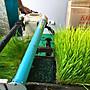 小麥草原汁 100%純原汁 訂購需等10~15天 市場上唯一 販售原汁 客製化製作商品 可詳談